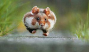 Lege schappen, hamsteren en het brein